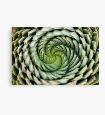 spiral aloe - lesotho's endangered species Canvas Print