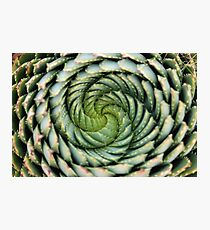 spiral aloe - lesotho's endangered species Photographic Print