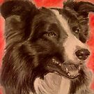 Beautiful Collie by DianeL