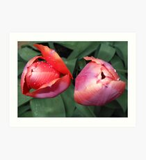 Dynamic Duo - Pretty Tulip Pair Art Print
