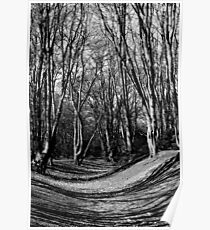 English Forest Trees  Poster