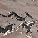 Playful Porpoises by Marguerite Foxon