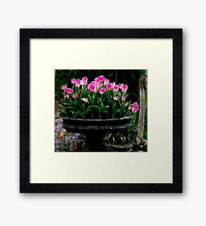 Pink Tulips in Fractalius Framed Print