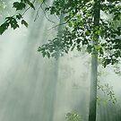 Enchanted Spring Morning by NatureGreeting Cards ©ccwri
