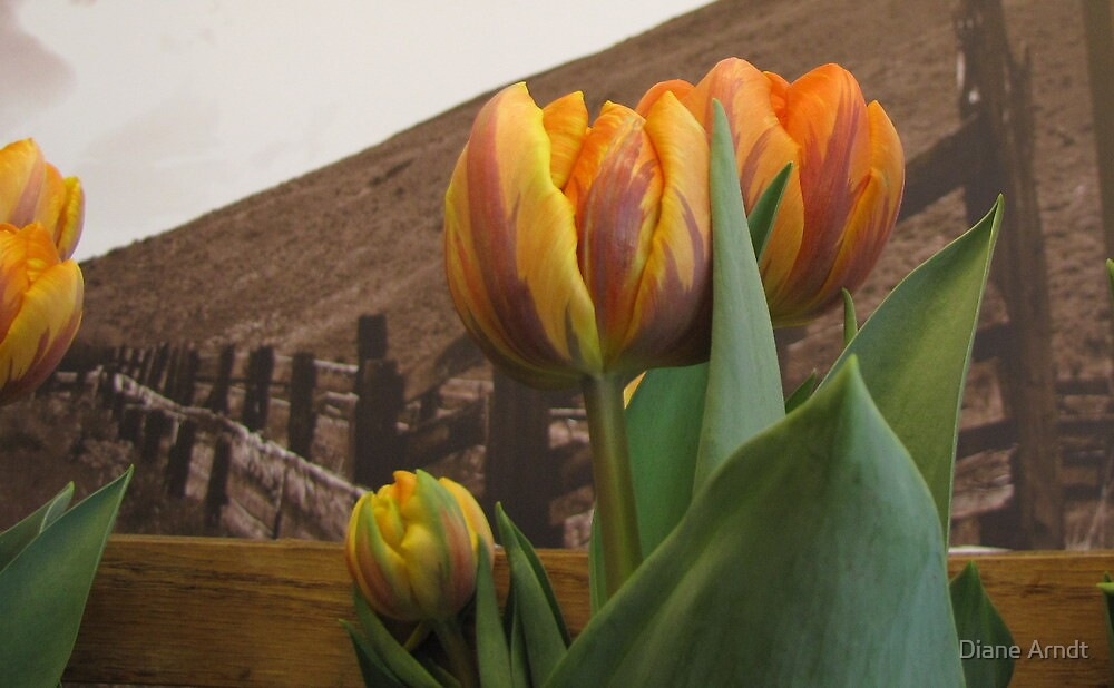 Grocery Store Tulip by Diane Arndt