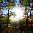Looking Into A Warm Autumn Sunrise by NatureGreeting Cards ©ccwri