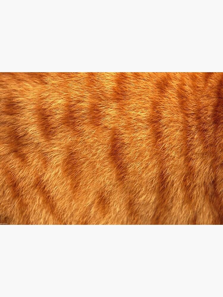 Katzen Fell  von odessapapa