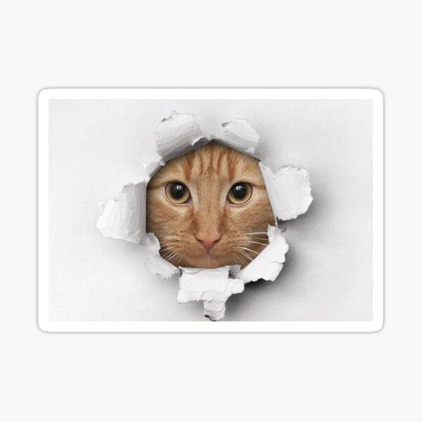 Cute cat's Face in a Hole Sticker