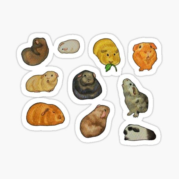 Guinea pig sticker set Sticker
