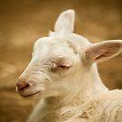 I'll Take a Little Nap Nowww.... by Joe Jennelle