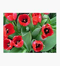 Inside Red Tulips Photographic Print