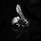 Dead Wasp by Dave  Kennedy