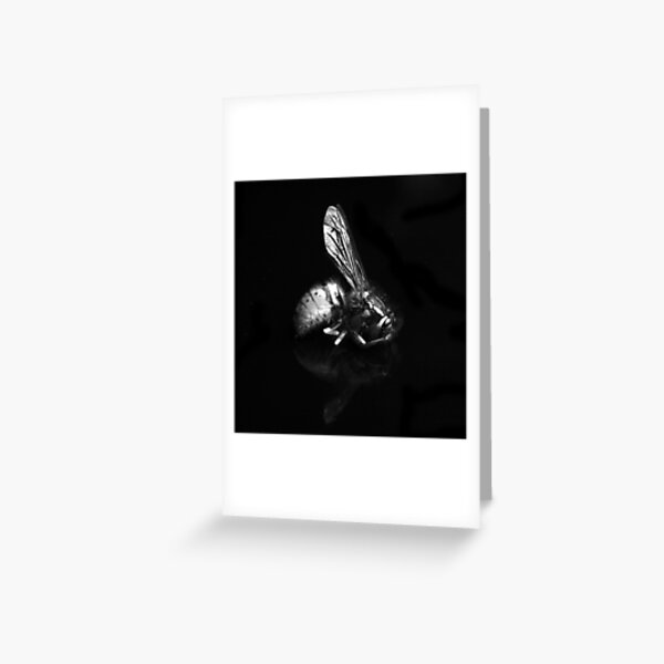 Dead Wasp Greeting Card