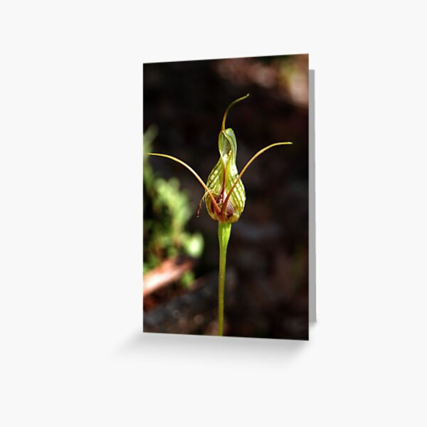 Bloated Bird Orchid Greeting Card