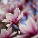 Gotta Love Spring! by Sam Warner