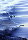 Blue Waves by Debbie Pinard