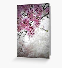 Cherry Dreams Greeting Card