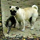 Showing The Way /Kitten and Pug  by Sandra Russell