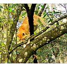 Tree Climbing Kitten  by Sandra Russell