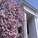 Classic Magnolia, Boston by Jane McDougall