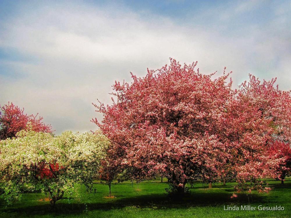 Spring-Arie den Boer Crab Apple Arboretum by Linda Miller Gesualdo