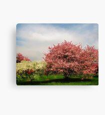 Spring-Arie den Boer Crab Apple Arboretum Canvas Print