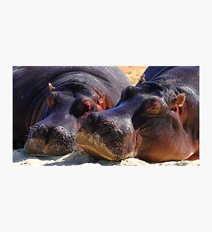 """Let Sleeping Hippos Lie"" Photographic Print"