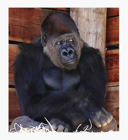 """Gorilla - What's Going on Over There?"" Photographic Print"