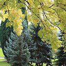 autumn tree shades by gaylene
