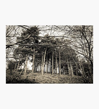 Looming - Perry Woods  Photographic Print