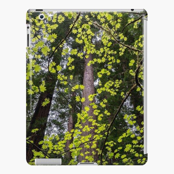 Vine Maple iPad Snap Case