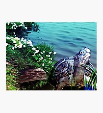 nature-Turtle  Photographic Print