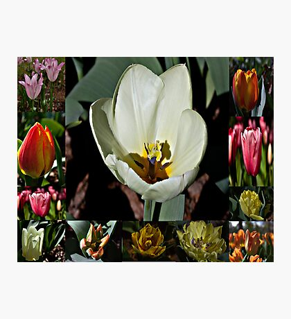 The First Bright Colors of Spring Photographic Print
