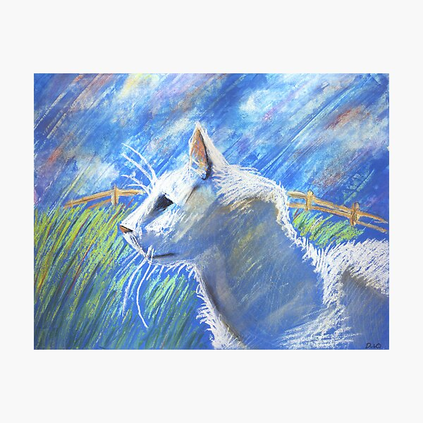 White Cat in the field Photographic Print