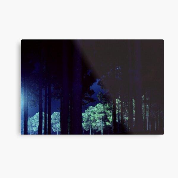 Pine Trees At Night Metal Print