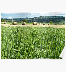 green fields and hay Poster