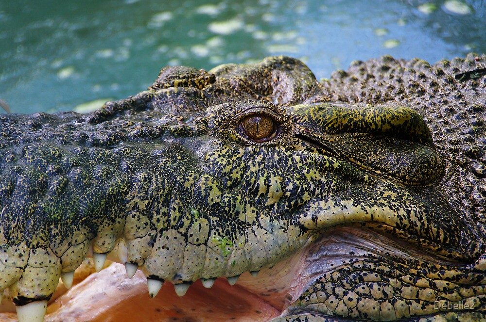 Crocodilian with open mouth by Debellez