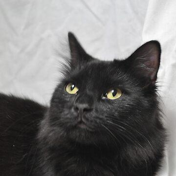 Black Cat by anadelis