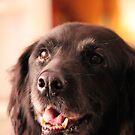 Saffy (Our dog) by Jackson  McCarthy