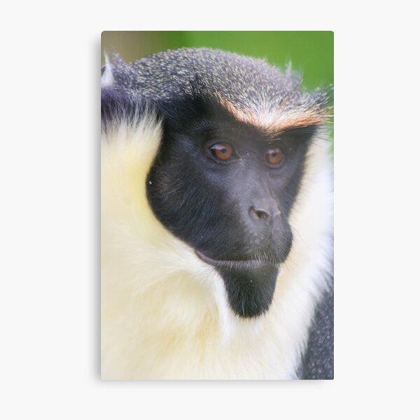 Diana Monkey  Metal Print