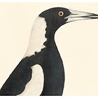 Magpie by madewithslnsw