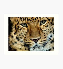 Zane ...Amur Leopard Art Print