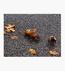 Dancing Leaves Photographic Print