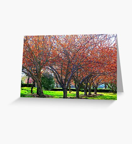 It's Spring in New York City!  Greeting Card