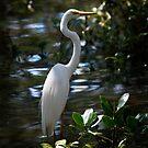 Great Egret (Ardea alba)  by Odille Esmonde-Morgan