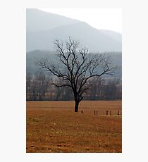 Lonesome Tree Photographic Print