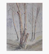Narrabri Tree Scene Photographic Print