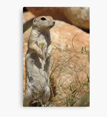 Round-tailed Ground Squirrel ~ Mommy Alert Canvas Print