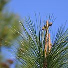 Pine tree crosses by Margaret  Shark