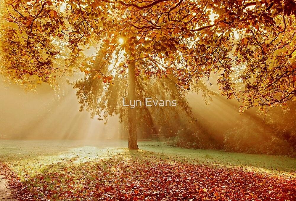 Autumn sunburst by Lyn Evans